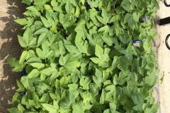 02d.-Hardenined-plants-IMG_0174