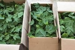 12d.-Packaging-plants-