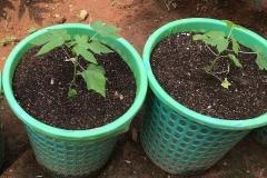 Basket-Plant-01